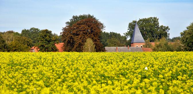Rapsfeld vor Dorf im Wendland