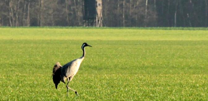 Tierwelt im Wendland