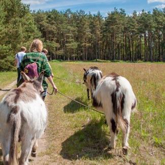 Geführte Eselwanderungen im Wendland