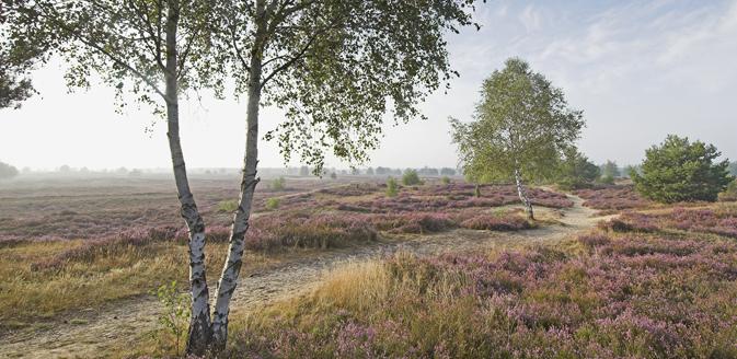 Nemitzer Heide © Nemitzer Heide Touristik