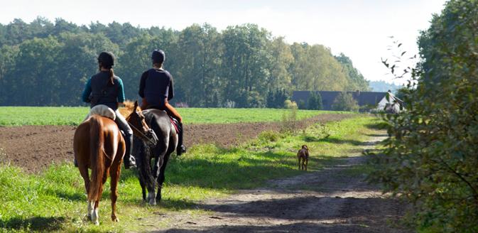 Reiterhöfe und Reiterferien im Wendland
