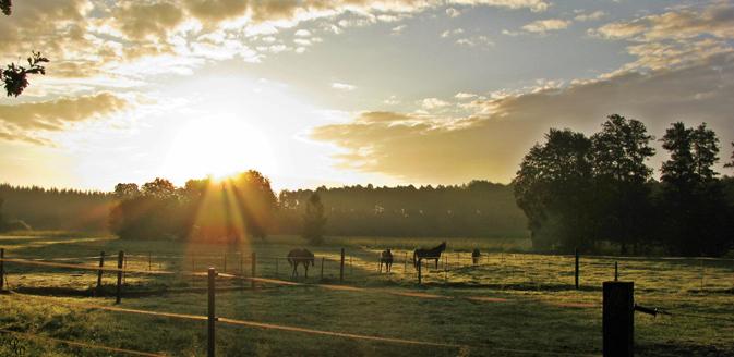 Sonnenuntergang auf der Koppel ©Petra Walther